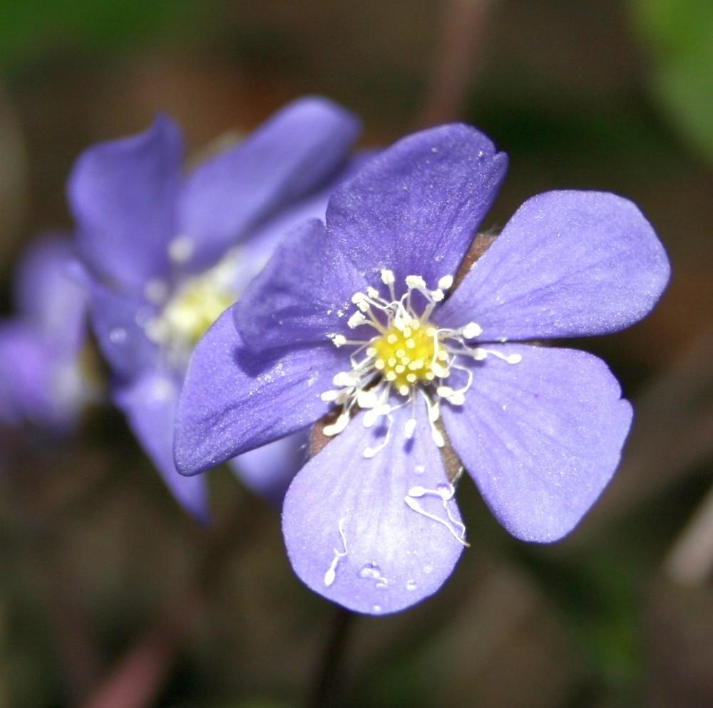 Blüte im Frühjahr