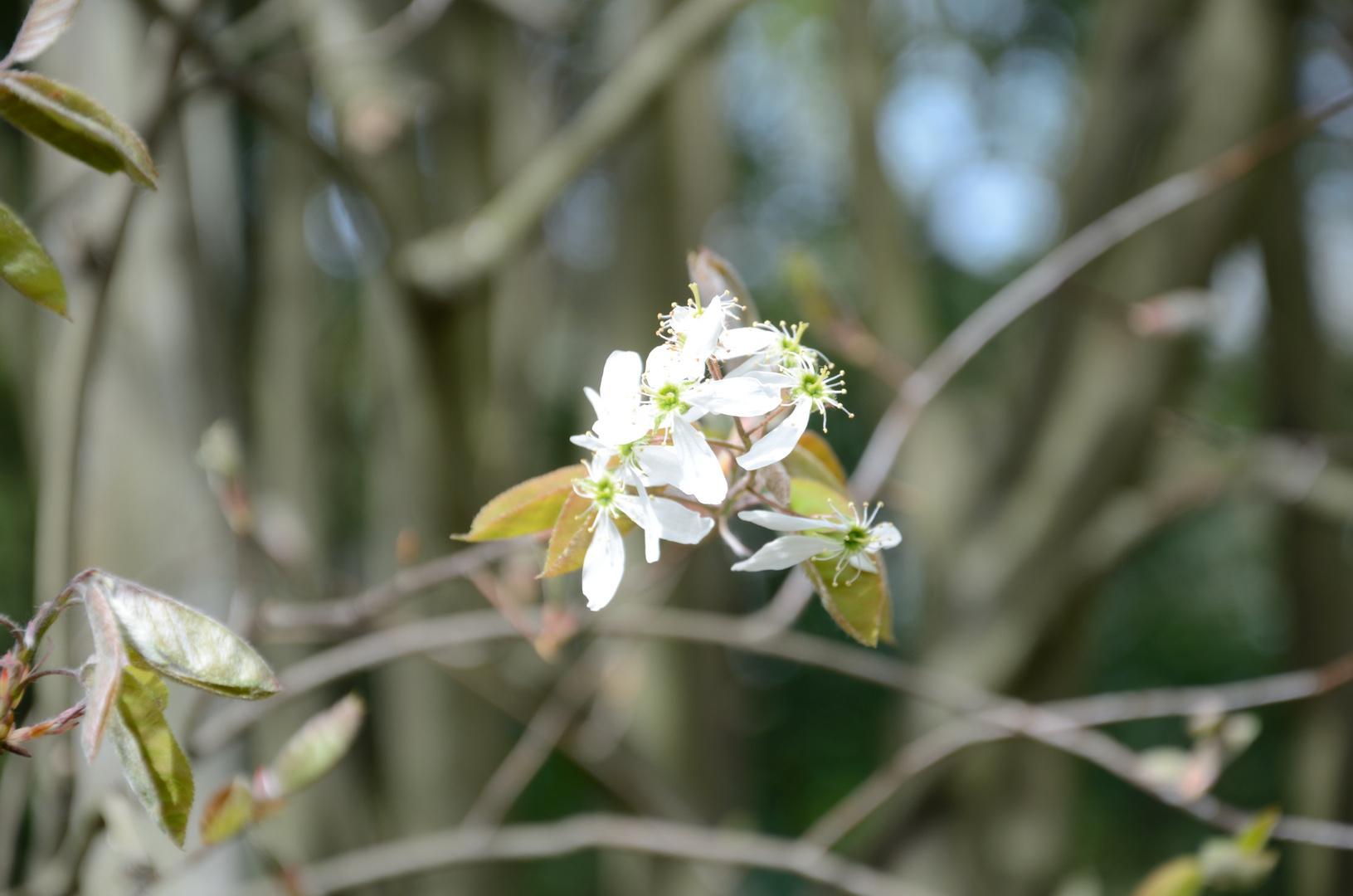 Blüte im Frühling