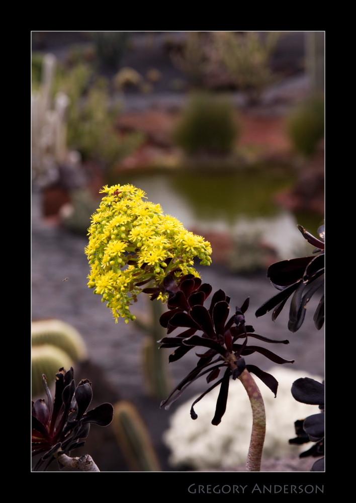 Blüte im Jardin de Cactus