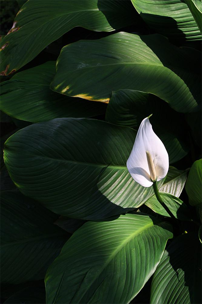Blüte im Licht