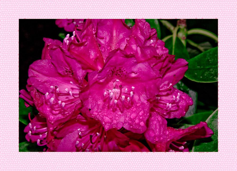Blüte im Mairegen