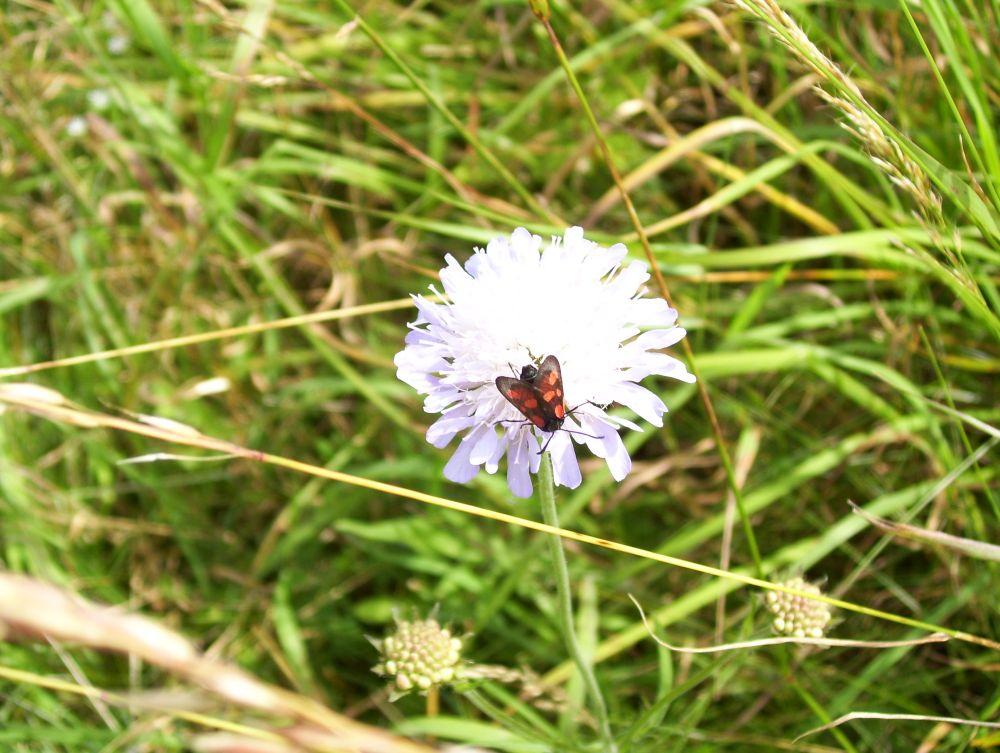 Blüte im Naturdorf Wollseifen