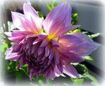 Blüte im Sonnenlicht