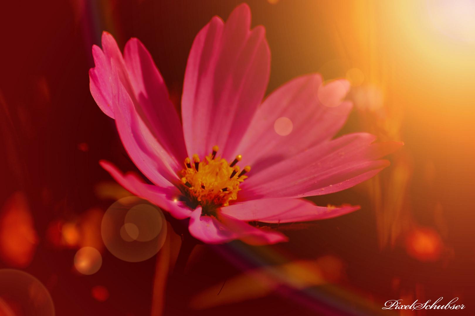 Blüte im Sonnenschein