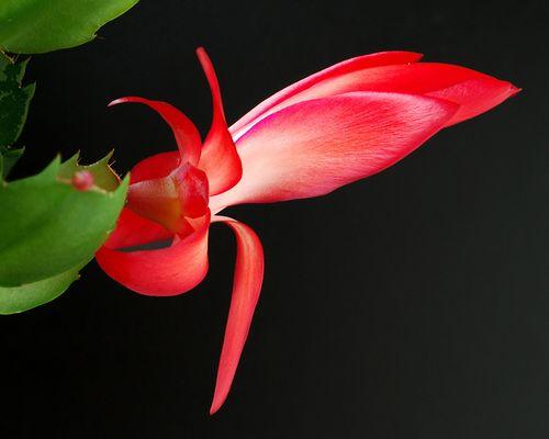 Blüte im Winter