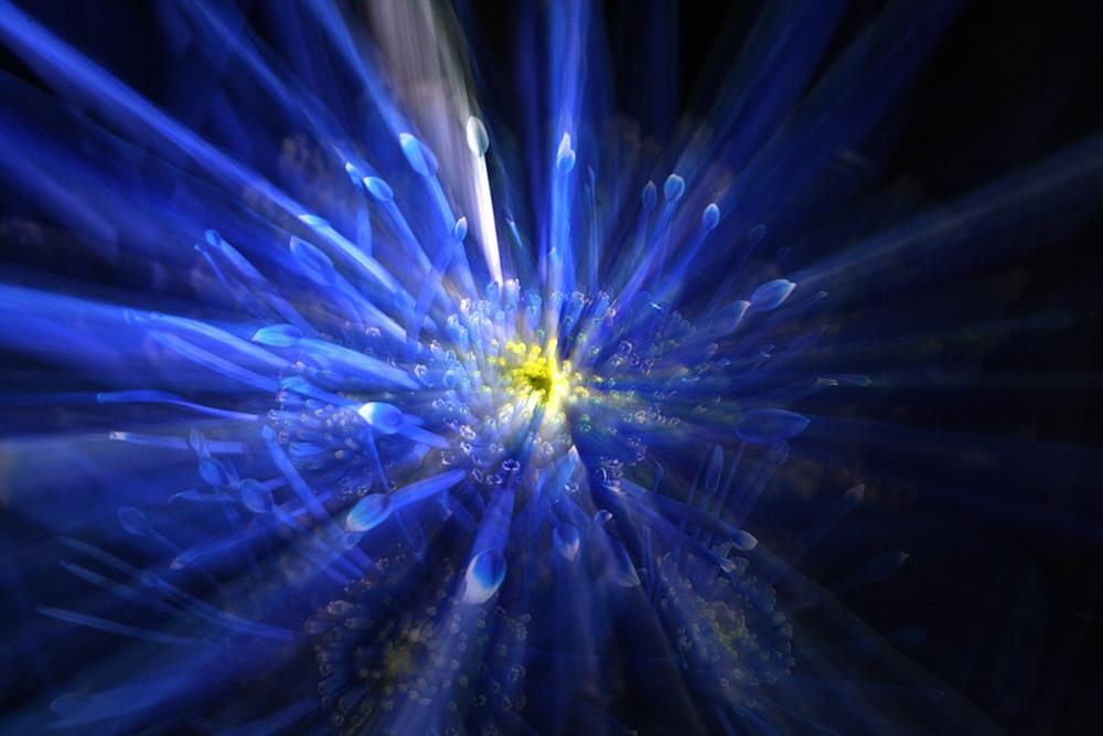 Blüte in Blau 4