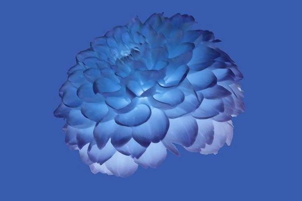 Blüte in blau