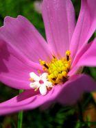 Blüte in Blüte
