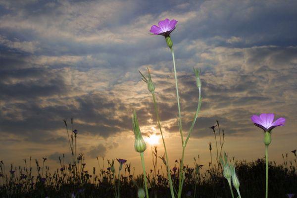 Bluete in der Abendsonne 1