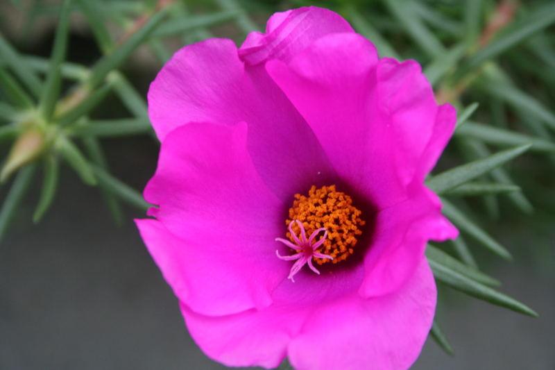 Blüte in der Blüte