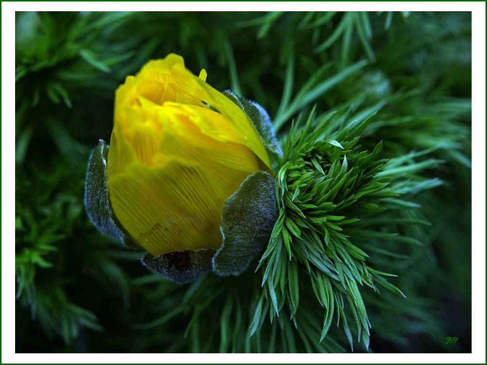Blüte in GELB