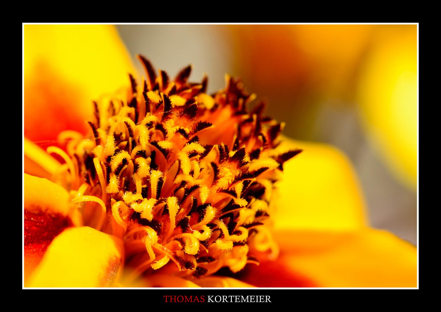 Blüte in Gelb 2