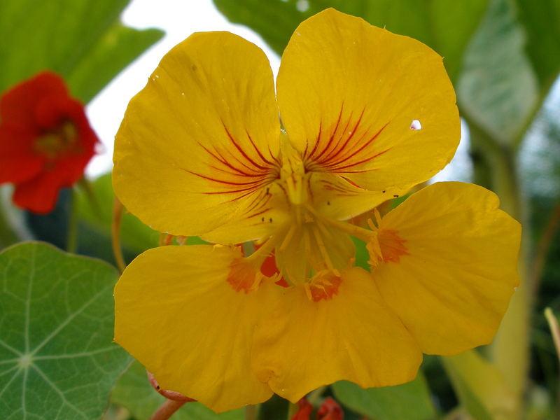 """"""" Blüte in Gelb im Mistbeet """" * 3 *"""