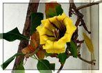 Blüte in Mogan