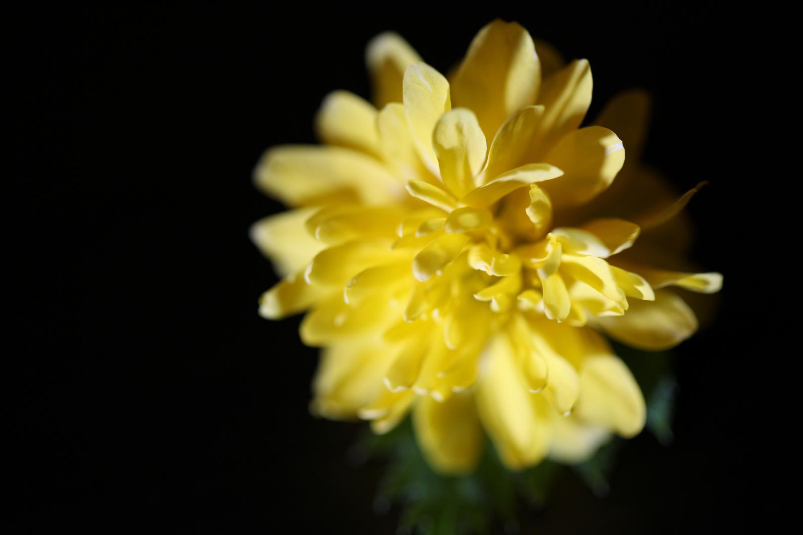 Blüte in Nostalgie