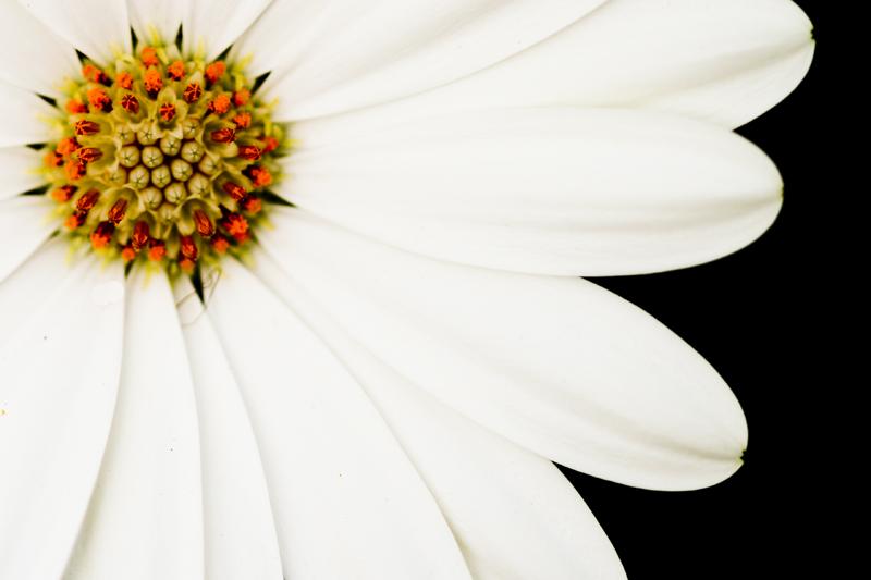 Blüte in weiss