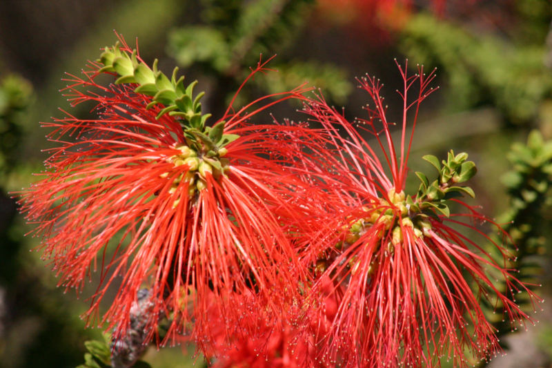 Blüte mal ohne Ameisen