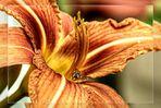 Blüte mit Besuch