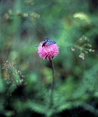 Blüte mit Falter