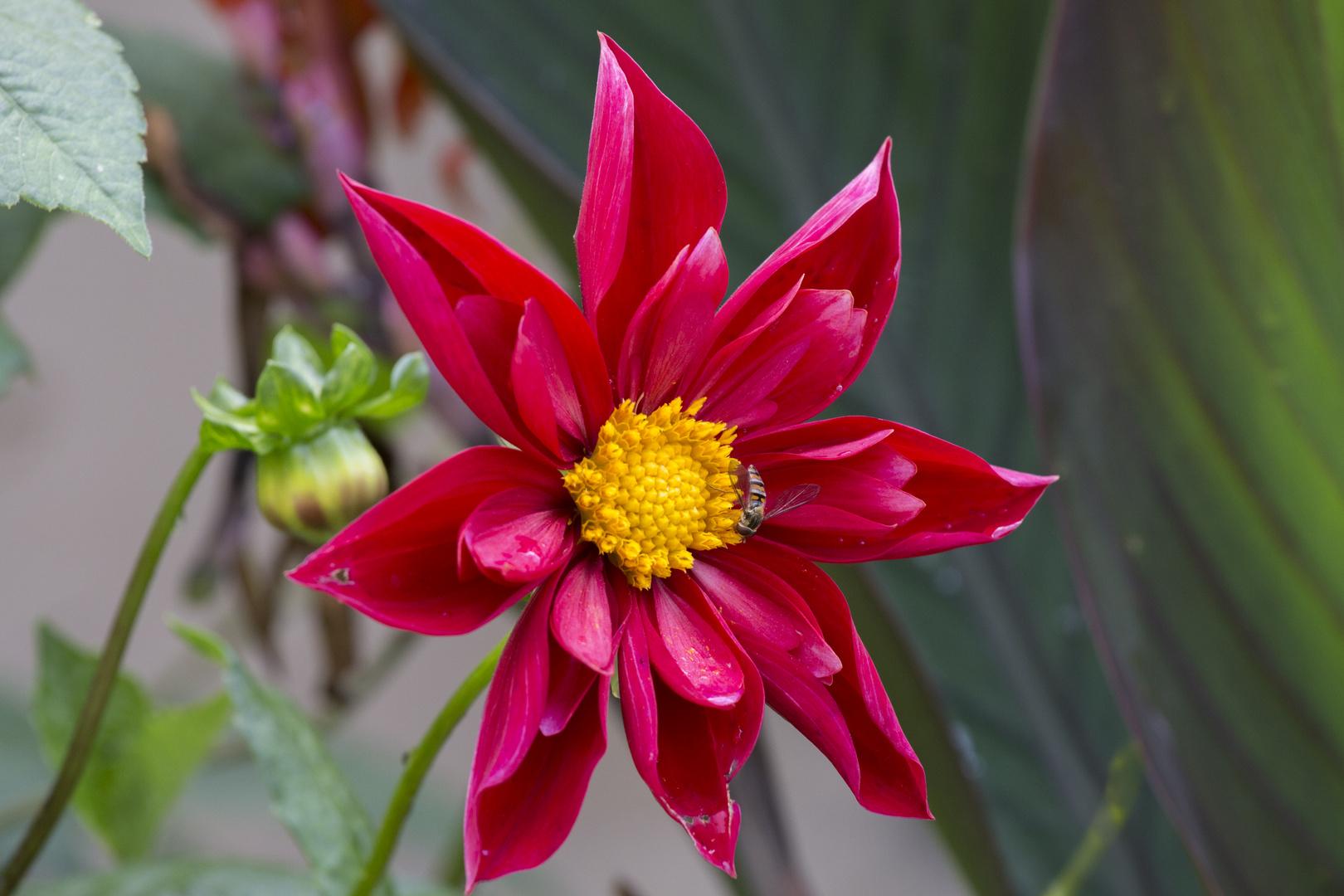 Blüte mit Insekt Wilhelma 3