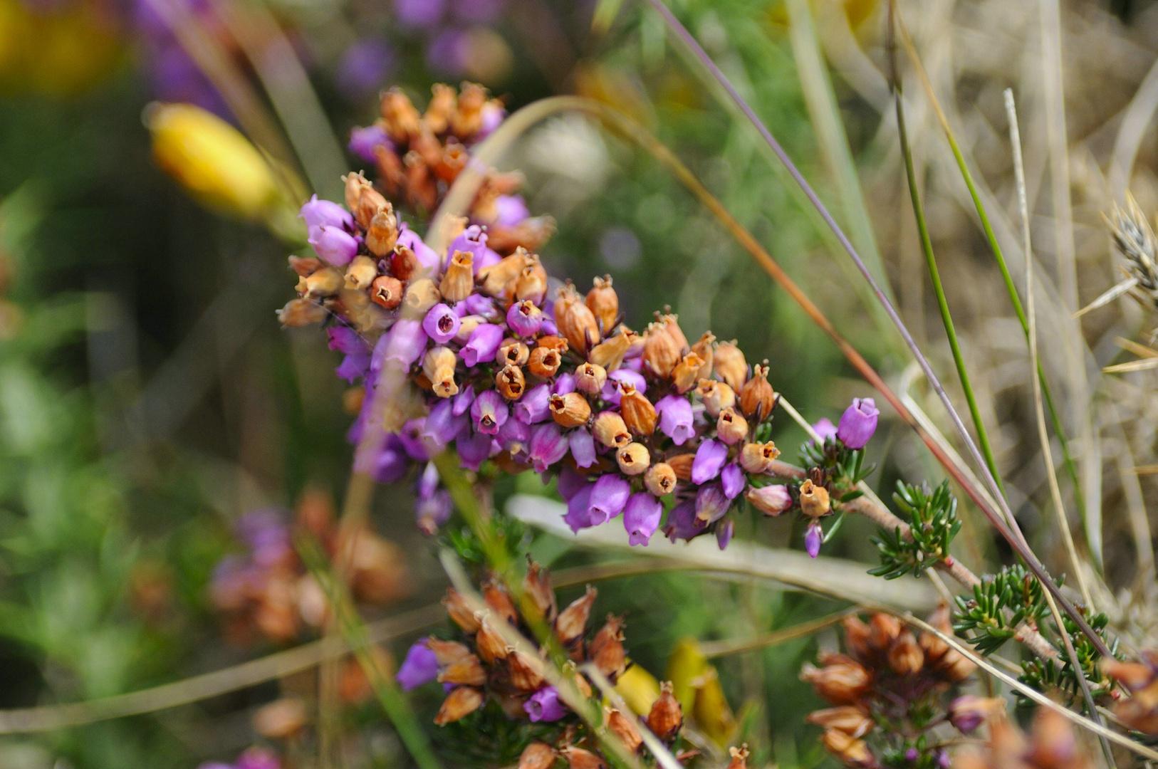 Blüte mit Jahreszeiten...........
