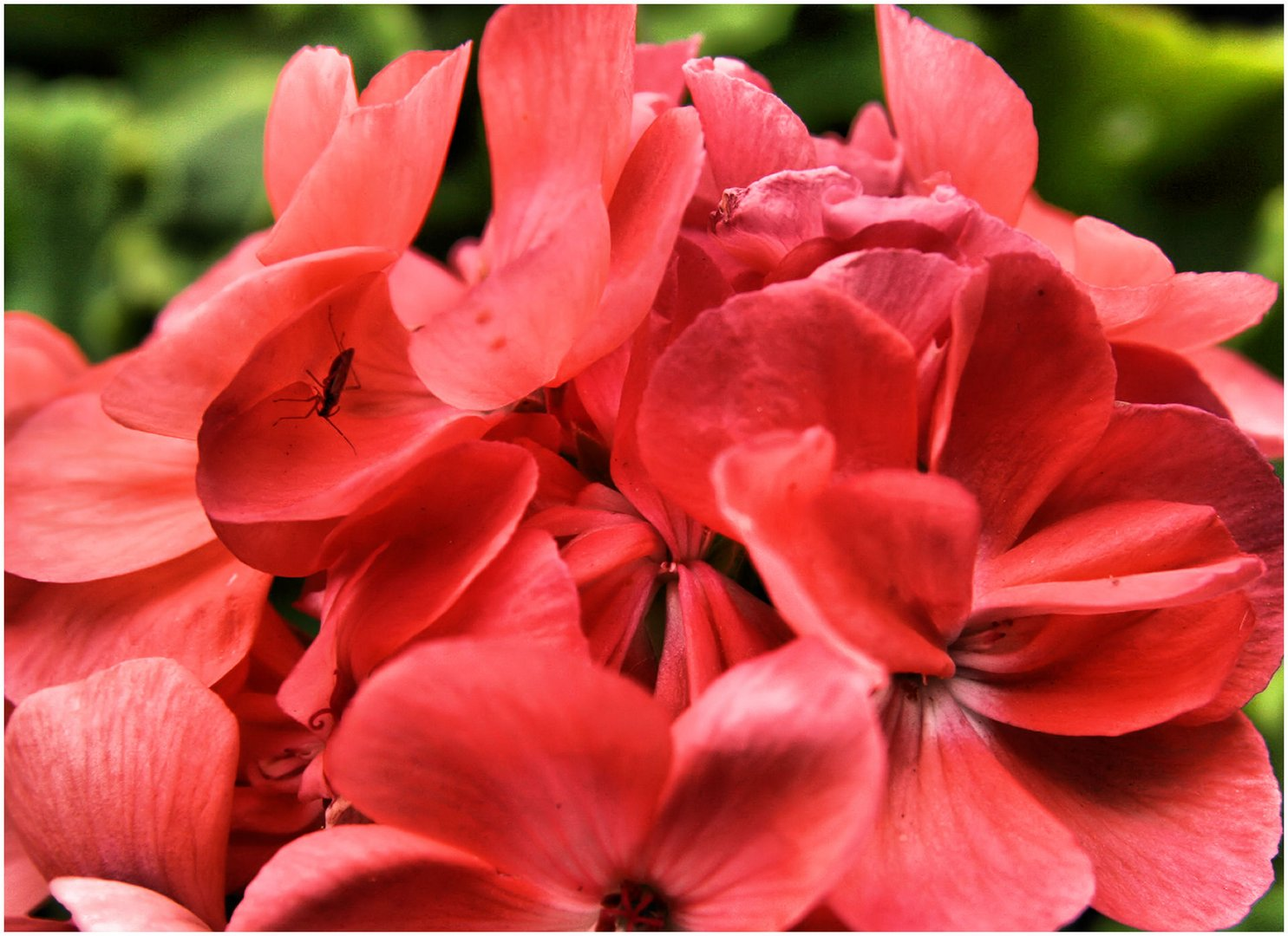 Blüte mit kleinen Besuch