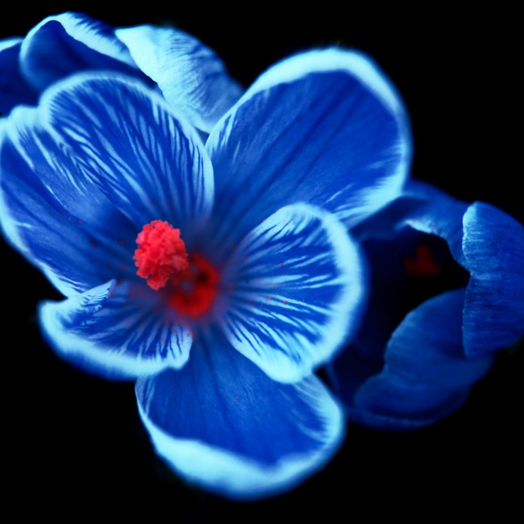 Blüte mit rotem Samen
