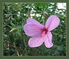 Blüte mit Schattenspiel