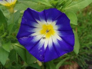 Blüte mit Suchspiel