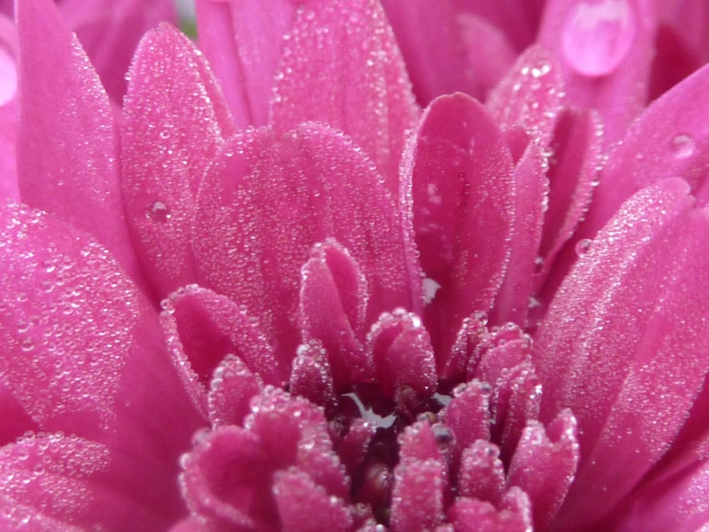 Blüte mit Tropfen
