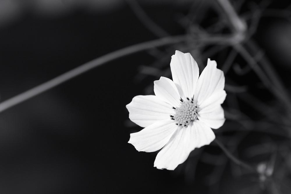 Blüte monochrom 1