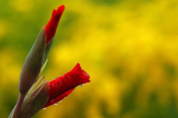 Blüte nach dem Regen