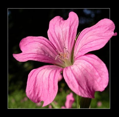 Blüte pur