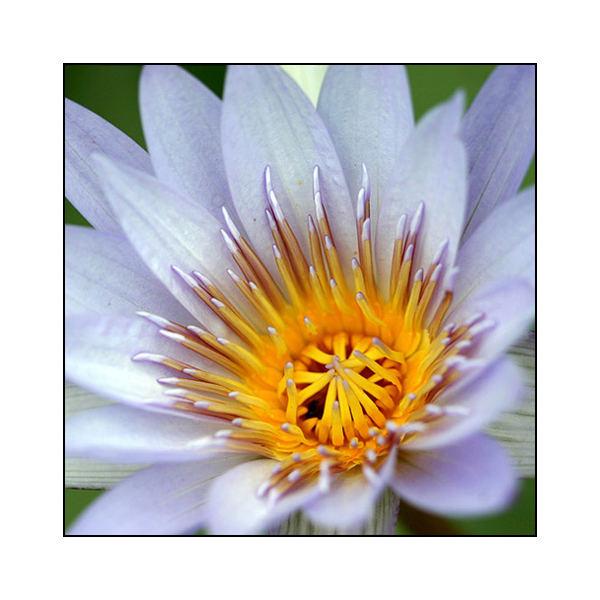 Blüte - reloaded