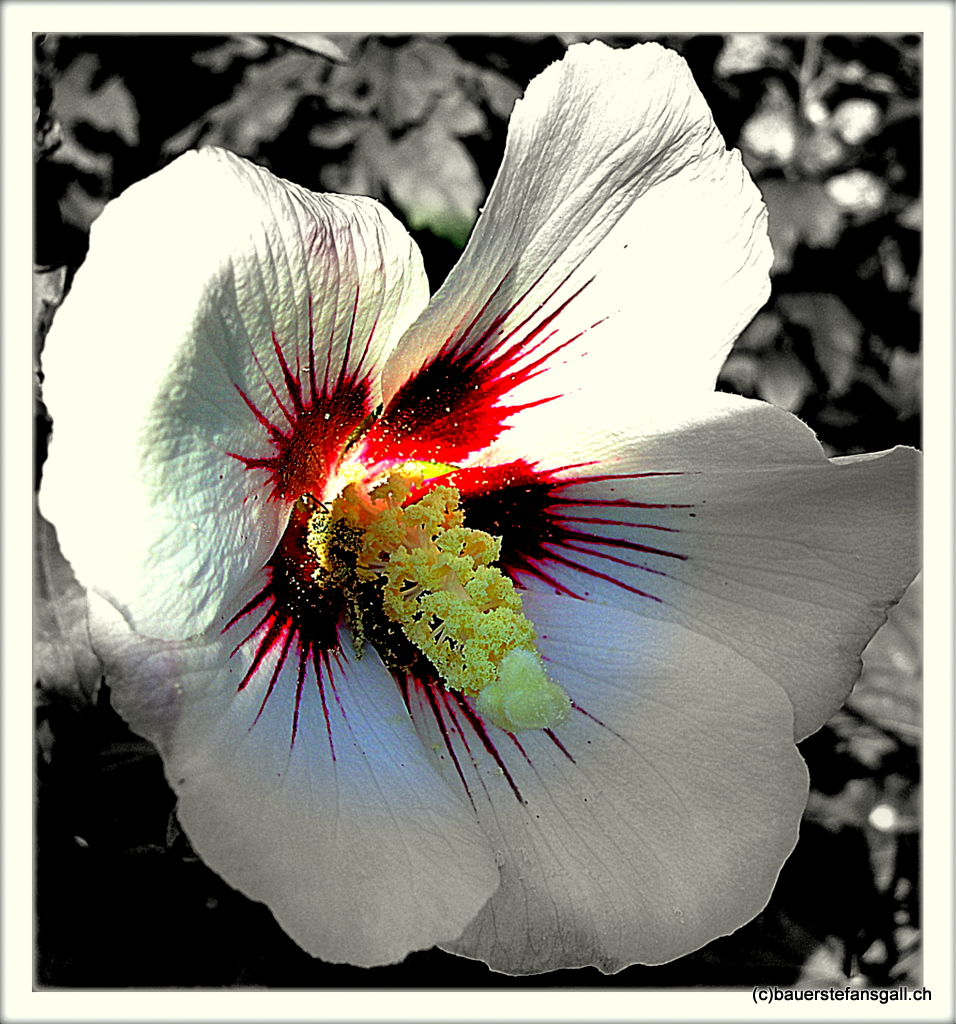 Blüte swr