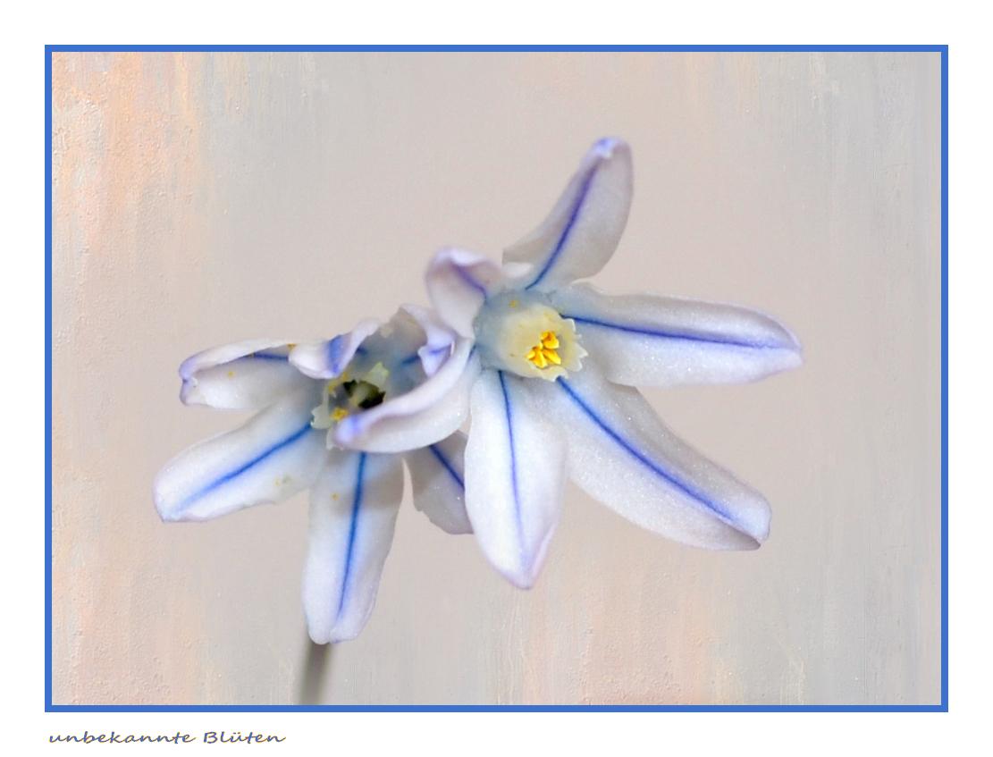 Blüte unbekannt...