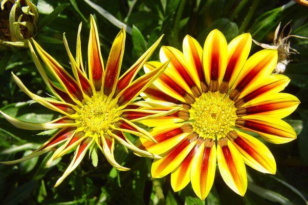 Blüte V