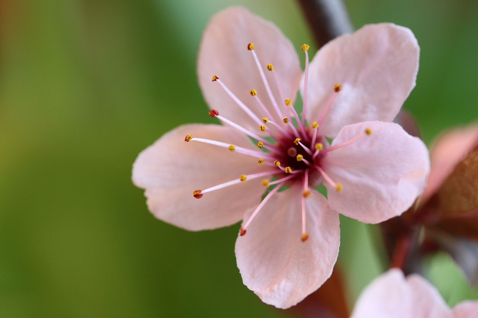 Blüte von Heute