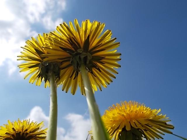 Blüte von unten