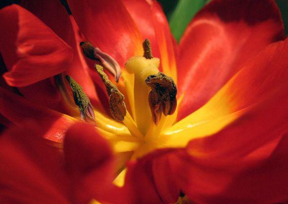 Blüte zweiter versuch