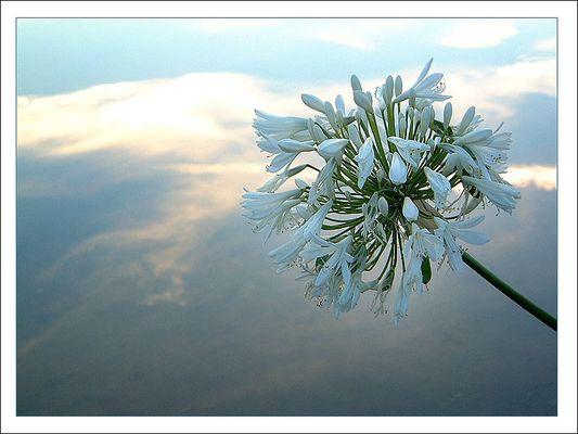 Blüte zwischen Himmel und Erde