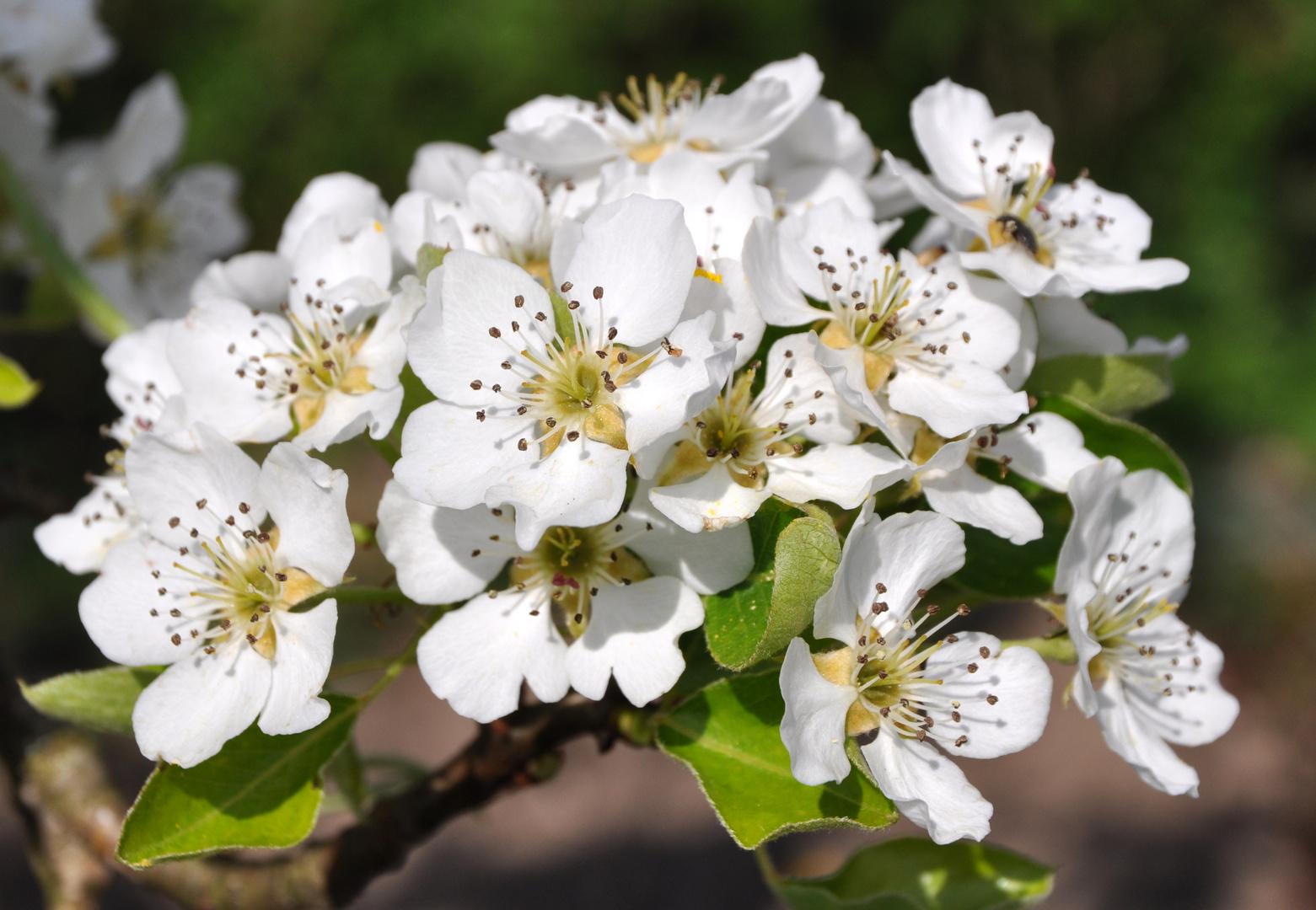 Blüten-1