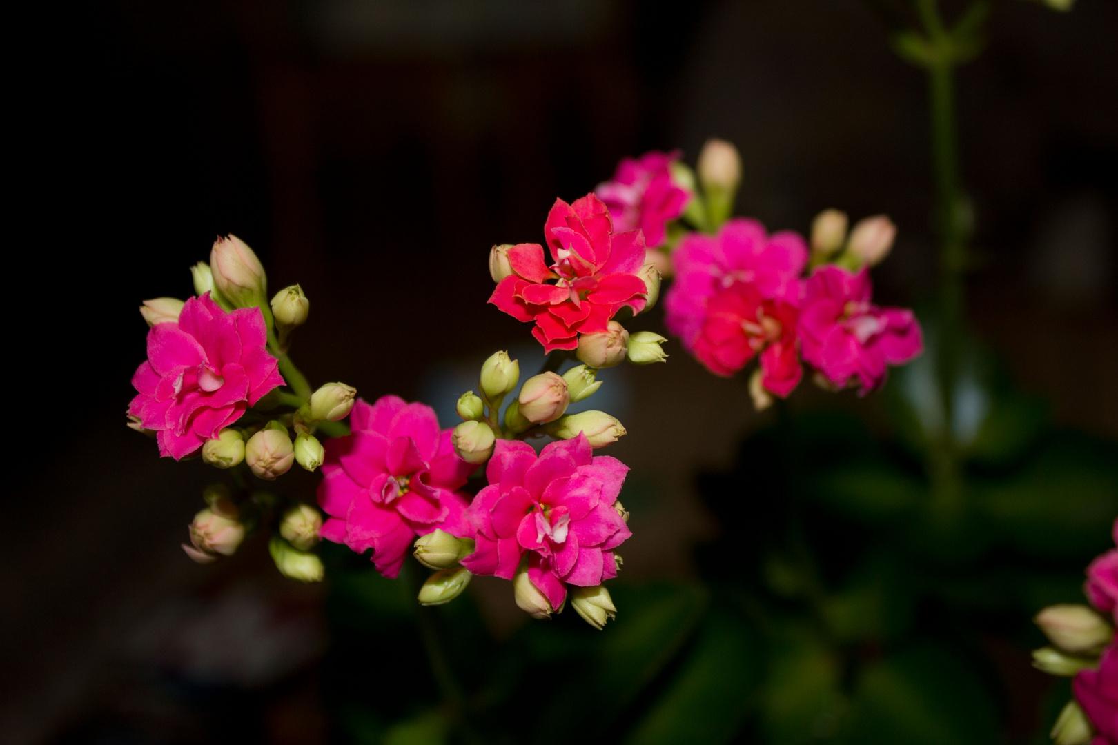 Blüten 1