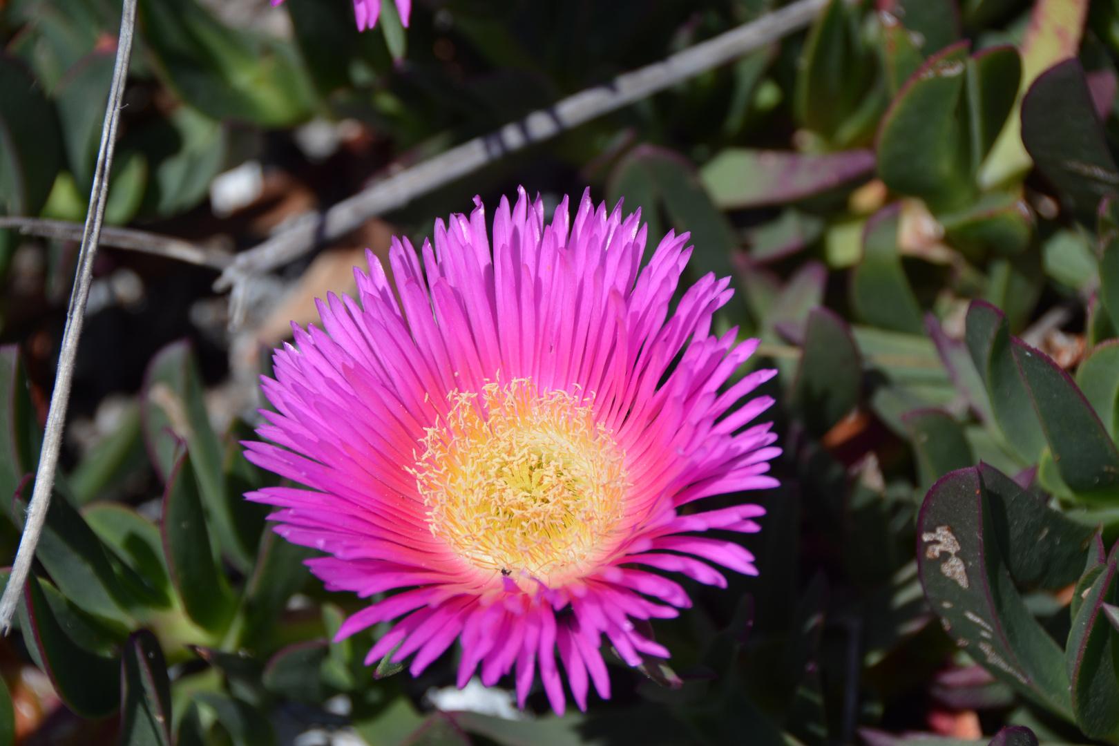 Blüten-2