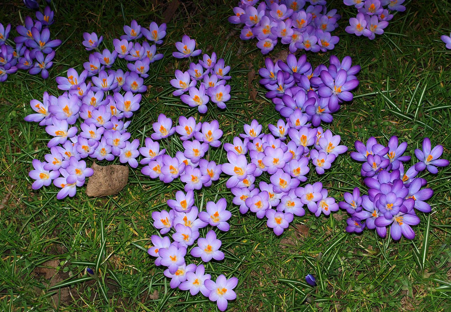 Blüten....