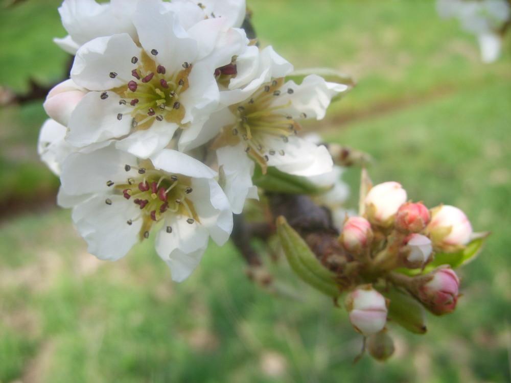 Blüten 5