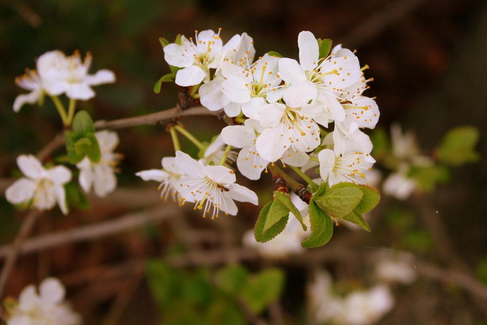 Blüten 7