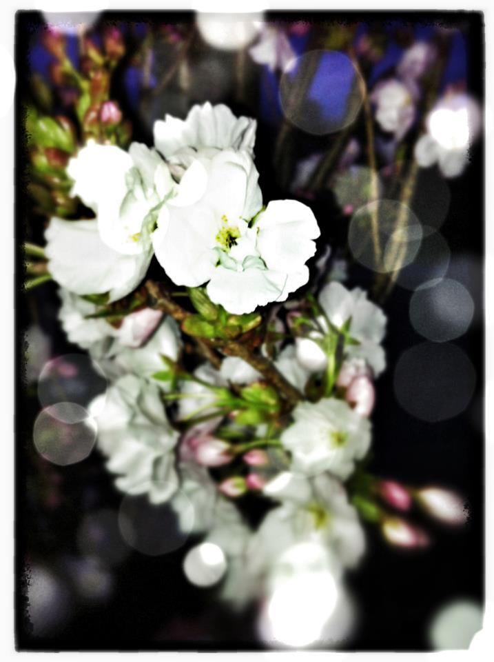 Blüten