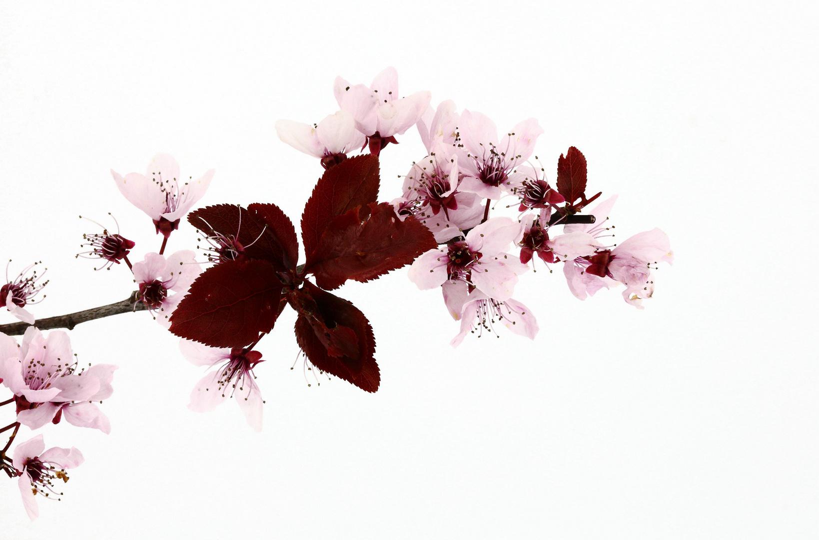 Blüten aj