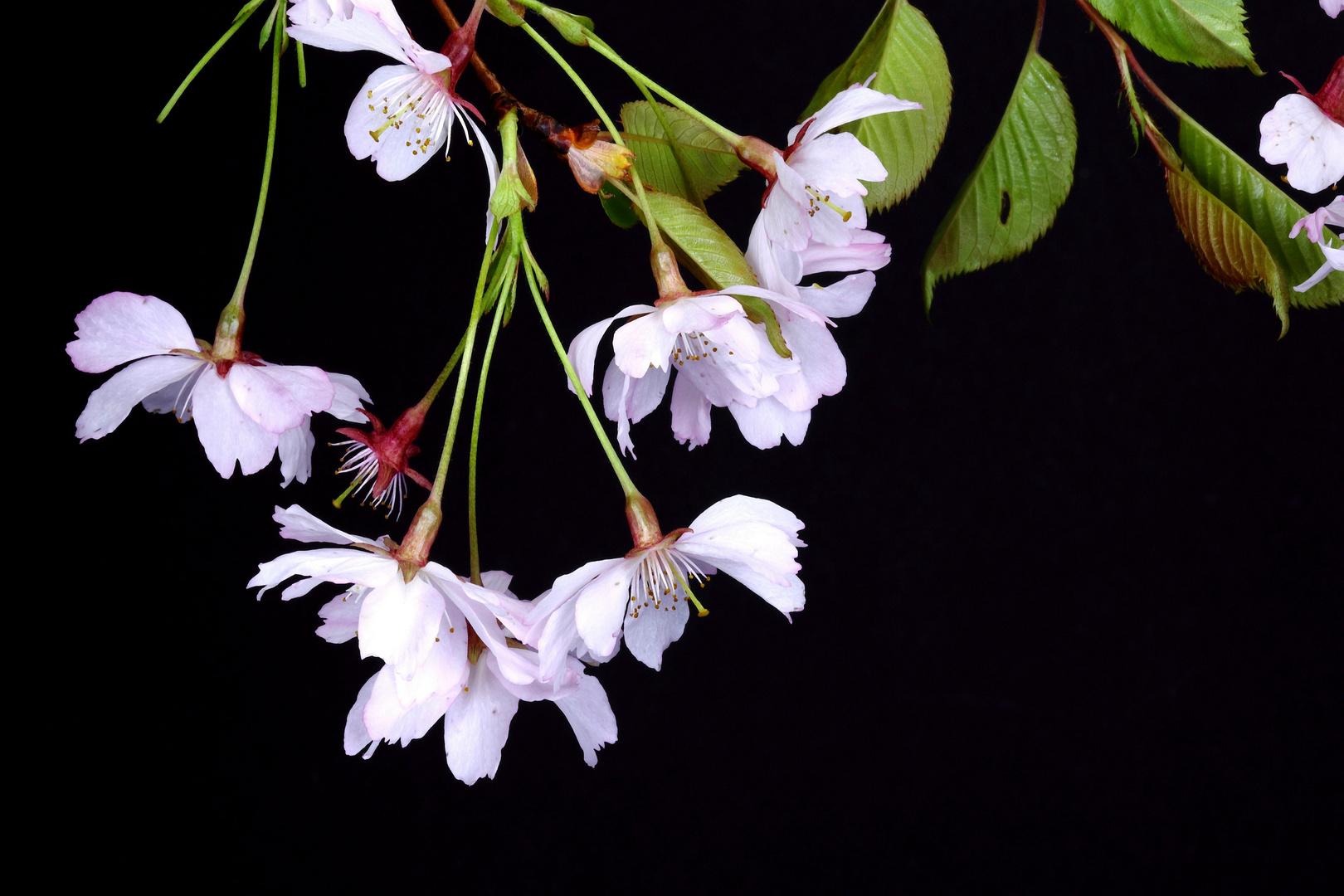Blüten al